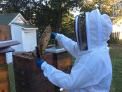 Dr. Luke Goembel works on his bee hive. Photo by Taylor DeVille.
