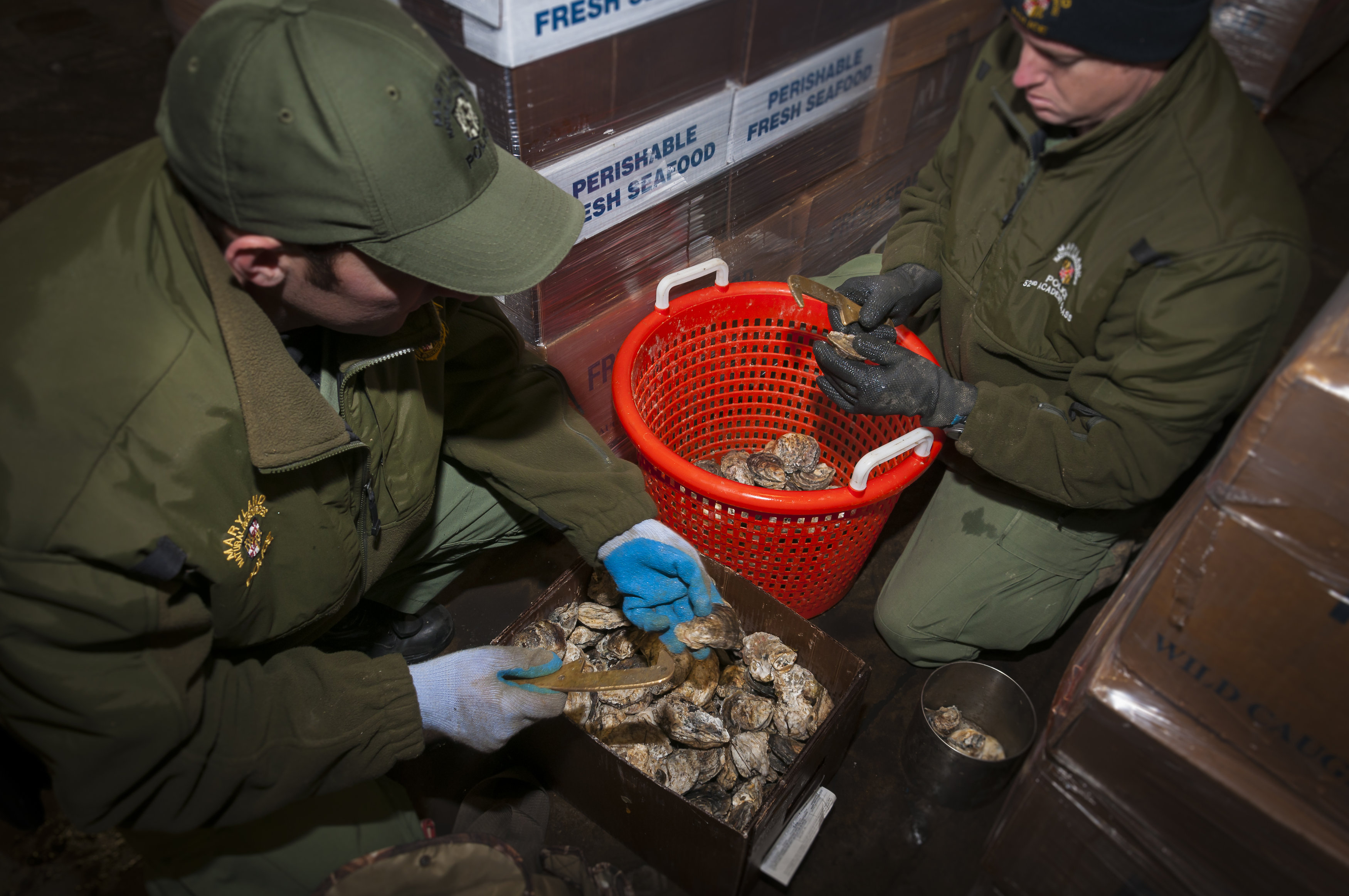 State officials cull oysters. Photo provided by Maryland Natural Resources Department.